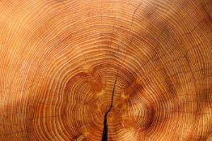 le bois, matère noble