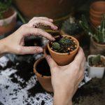 Planter des plantes